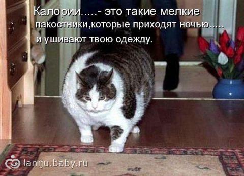 http://static3.babysfera.ru/1/b/e/0/20797933.75555797.jpeg