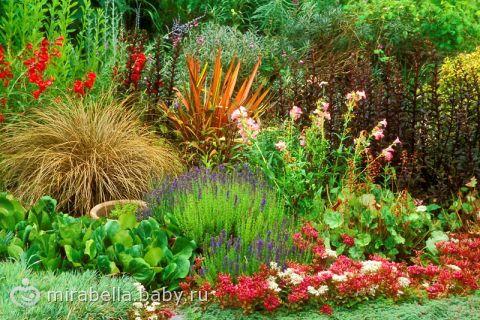 Многолетники: декоративные растения для сада