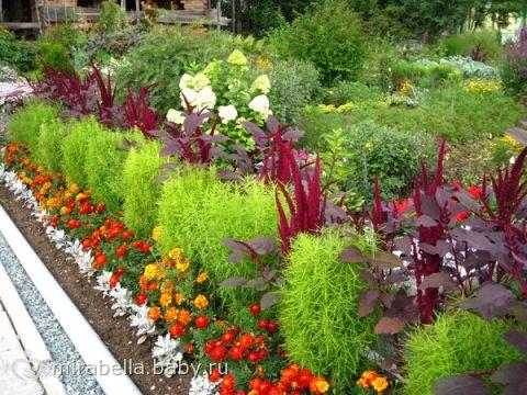 Многолетники декоративные растения