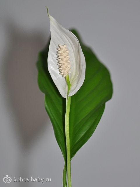 Гибнет женский цветок
