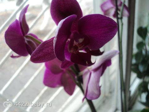 растений комнатных фото цветущих