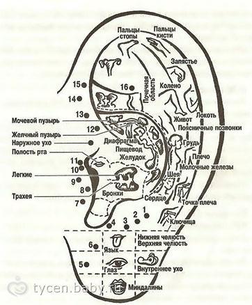 Гирудотерапия выборгский район