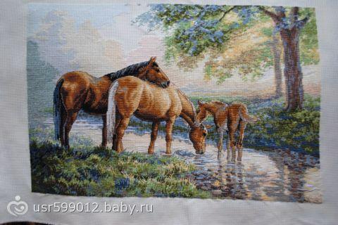 Лошади на водопое