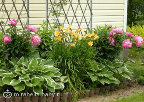 Фото многолетников для сада