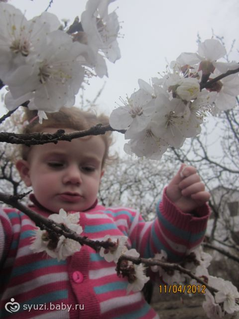 У нас уже цвели деревья