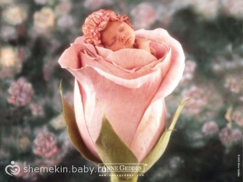 Продукты ГМО и вред для младенцев, плаценты и пуповины