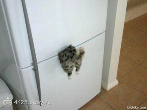 Кот застрял в холодильнике!