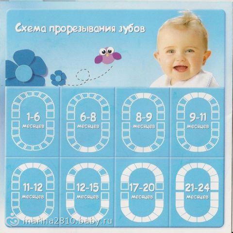 схема прорезывание зубов у младенцев